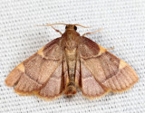 5533 - Yellow-fringed Dolichomia - Hypsopygia olinalis