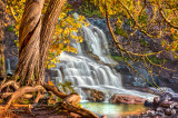 ** 16.2 -  Gooseberry Cedars At Middle Falls, Autumn