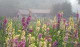 262 - Botanical: Foxglove Garden