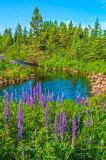 Arrowhead: Manitou River With Lupines