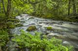 Tait River: Summer Greens LCD_5166.jpg