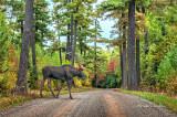 730 - Arrowhead Trail: Moose Crossing
