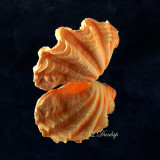 Fluted Giant Clam, Reflected