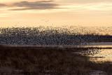 Spring Migration 2018