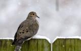 Easter Snow Birding