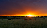Stormy Sunset with Cattle