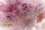 Spring blossom 2018