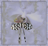 Butterfly and Orchid by Liz       July 2017