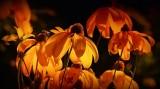Flowers_PB_1000.jpg