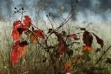 Autumn_PB_1000.jpg