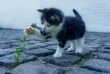 Kitten_PB_1000.jpg