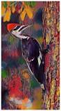 Bari's Bird