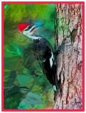 Mr. P. Woodpecker