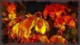 Echinacea -- Like Glowing Laterns