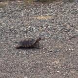 Turtle_Fay_1000.jpg