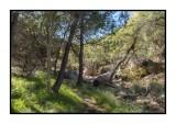16 11 13 157 Madera Canyon