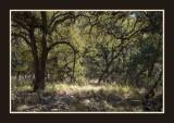 16 11 13 185 Madera Canyon