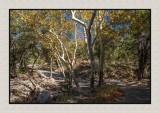 16 11 13 191 Madera Canyon