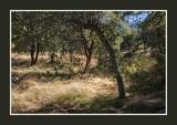 16 11 13 193 Madera Canyon