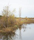 Shoreline Willows