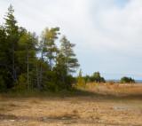 Dry Peat Bog