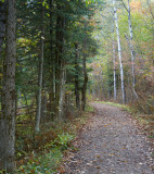 Trail Near Pinney Bridge