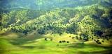 Little Antelope Grade West Delavan California 438