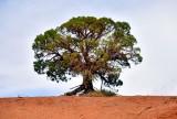 Tree at Monument Valley Navajo Tribal Park 491
