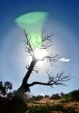 Sun Glare on Tree at Monument Valley 765