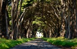 Cyprus Tree Tunnel on Point Reyes National Seashore California 756