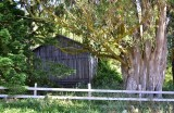 Barn in Sonoma County 332