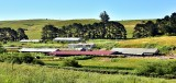 Large farm in Sonoma County California 373