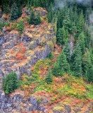 Fall in the Pacific Northwest Skykomish Washington 119
