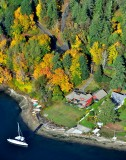 Fall colors on Bainbridge Island Washington 205