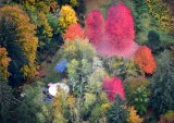Fall Foliage in Snoqualmie River Valley by Fall City Washington 517