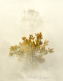Bright Yellow Trees in Fog by Monroe Washington 611