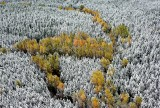 Fresh snow on fall foliage 309