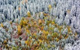 Fresh snow on fall foliage 529