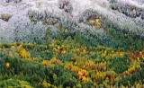 Fresh snow on fall foliage 382