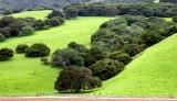 Scenic landscape along Carmel Valley road 065