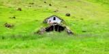 Icelandic Barn 497
