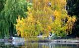 Willow at Drakes Park, Bend, Oregon 331