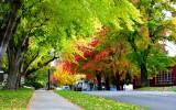 Autumn foliage on Wall Street in Bend Oregon 482