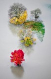 Colorful trees in flooded Snoqualmie River, Fall City, Washington 546