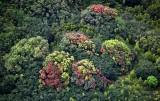 Tropical Forest on slope of Haleakala Mountain, Maui, Hawaii 322