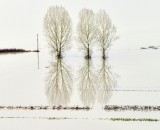Majestic Trees in Flooded Snoqualmie River Valley, Washington 141