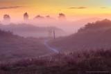 2N9B8147 sunrise Hulsthorster zand