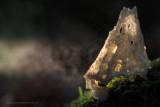 2N9B1388  lampje