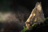 2N9B138 little light / lampje