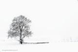 2N9B3102 winter Dalfsen